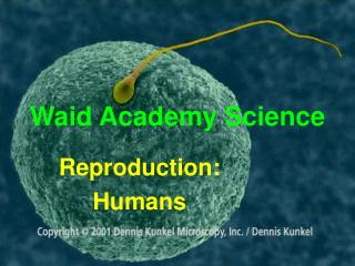 Waid Academy Science
