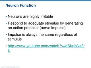 Neuron Function