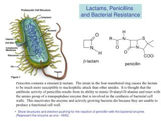 Lactams, Penicillins  and Bacterial Resistance