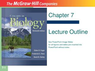 Chapter 7 Lecture Outline See PowerPoint Image Slides for all figures and tables pre-inserted into PowerPoint without n