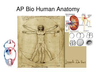 AP Bio Human Anatomy