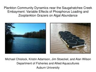 Plankton Community Dynamics near the Saugahatchee Creek Embayment: Variable Effects of Phosphorus Loading and Zooplankto