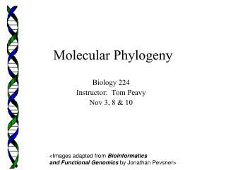 Molecular Phylogeny