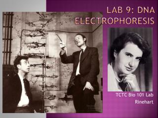 Lab 9:  Dna eLECTROPHORESIS