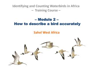 – Module 2 –   How to describe a bird accurately Sahel West Africa
