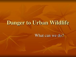 Danger to Urban Wildlife
