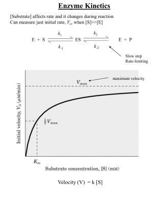 [Substrate] affects rate and it changes during reaction Can measure just initial rate,  V o , when [S]>>[E] 	E  +  S		E