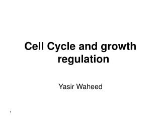 Cell Cycle and growth regulation Yasir Waheed