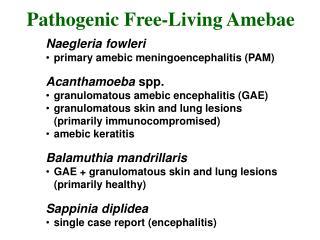 Naegleria fowleri primary amebic meningoencephalitis (PAM) Acanthamoeba  spp. granulomatous amebic encephalitis (GAE)