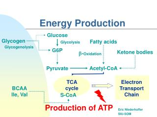 Energy Production