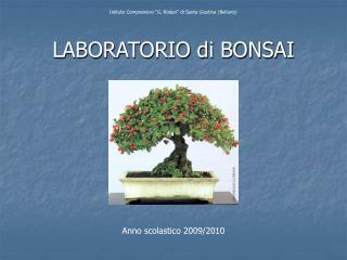 LABORATORIO di BONSAI