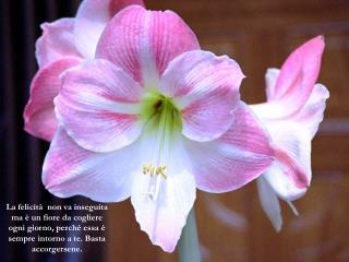 La felicità  non va inseguita ma è un fiore da cogliere ogni giorno, perché essa è sempre intorno a te. Basta accorgers