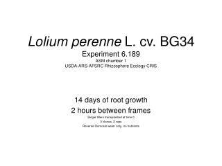 Lolium perenne  L. cv. BG34 Experiment 6.189 ASM chamber 1 USDA-ARS-AFSRC Rhizosphere Ecology CRIS