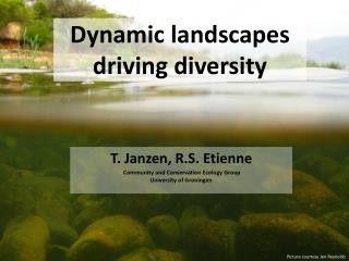 Dynamic landscapes driving diversity