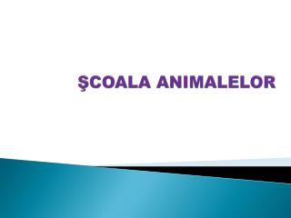 ŞCOALA ANIMALELOR
