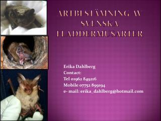Artbestämning av svenska fladdermusarter