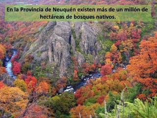 En la Provincia de Neuquén existen más de un millón de  hectáreas de bosques nativos.