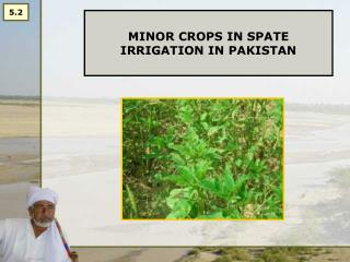MINOR CROPS IN SPATE IRRIGATION IN PAKISTAN