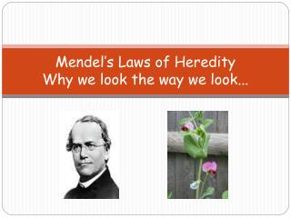 Mendel's Laws of Heredity Why we look the way we look...