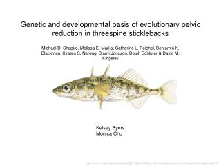 Genetic and developmental basis of evolutionary pelvic reduction in threespine sticklebacks