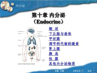 第十章 内分泌 ( Endocrine )