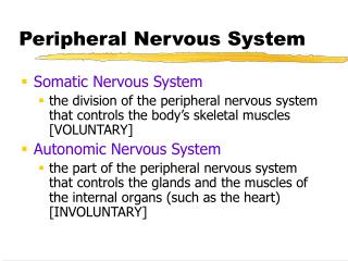 PPT - Nervous System Outline. PowerPoint Presentation - ID:1466730
