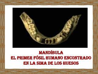 Mandíbula El primer fósil humano encontrado en la sima de los huesos