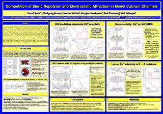 Competition of Steric Repulsion and Electrostatic Attraction in Model Calcium Channels