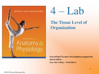 4 � Lab  The Tissue Level of Organization