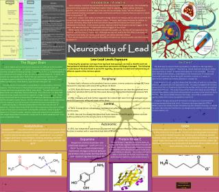 Neuropathy of Lead