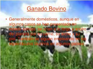 Ganado Bovino