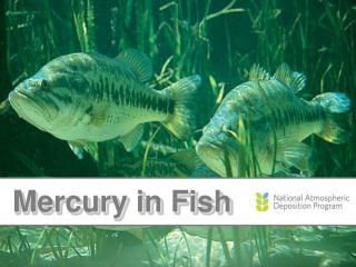 Mercury  in Fish
