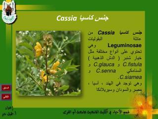 جنس كاسيا  Cassia