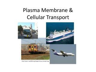 Plasma Membrane &  Cellular Transport