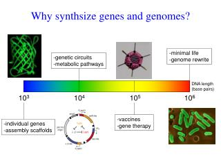 Why synthsize genes and genomes?