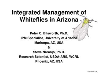 Integrated Management of Whiteflies in Arizona