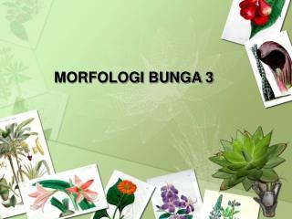 MORFOLOGI BUNGA 3