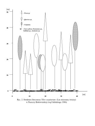 Ryc. 2. Struktura fitocenozy  Tilio-carpinetum   (Las mieszany świeży) w Puszczy Białowieskiej (wg Falińskiego 1986)