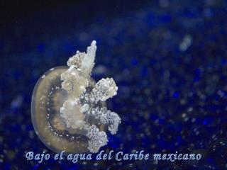 Bajo el agua del Caribe mexicano