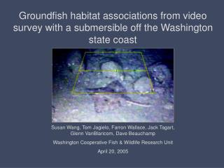 Groundfish habitat associations from video survey with a submersible off the Washington state coast