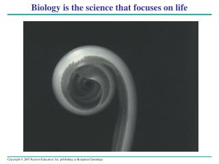 Biology is the science that focuses on life