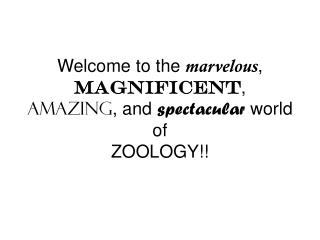 Welcome to the  marvelous ,  magnificent ,  amazing , and  spectacular  world of  ZOOLOGY!!