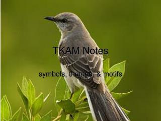 TKAM Notes