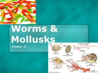 Worms & Mollusks