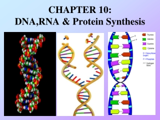 Chemical Synthesis of DNA 1
