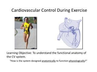 Cardiovascular Control During Exercise