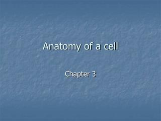 Anatomy of a cell