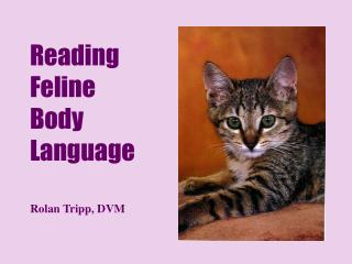 Reading Feline Body Language