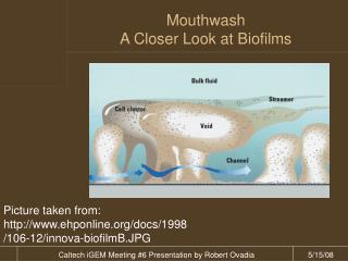 Mouthwash A Closer Look at Biofilms