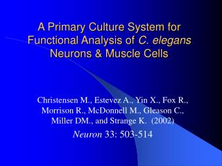A Primary Culture System for Functional Analysis of  C. elegans  Neurons & Muscle Cells